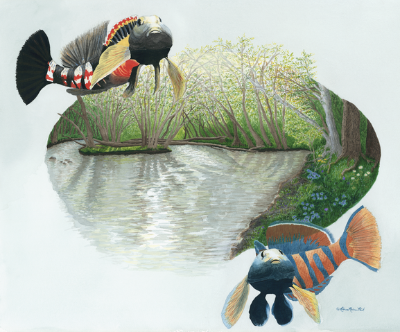 Nature art from studio d'une. Darters as one with Darby Creek in the spring.