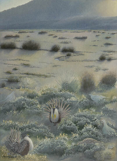 studio d'une - sage grouse one with sage forest